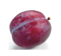 pruim_jubileum_fruitkraam_buttinge